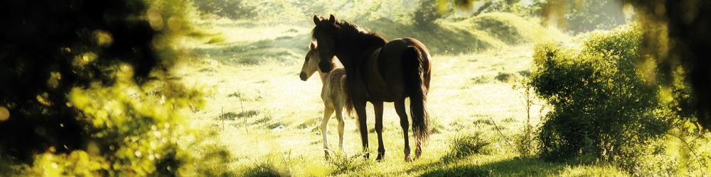 Diagnostic Animals - Furanalysis or Hairanalysis - Selenium - horse